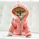 Jiff the Pom Dog Visits Vogue